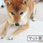 柴犬コマリ ペット用マット