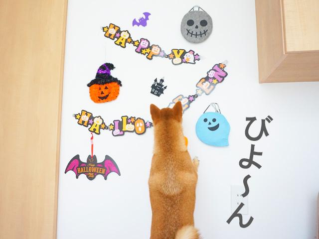 柴犬コマリ ハロウィン 飾り
