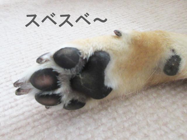 柴犬コマリ 肉球ケア クリーム