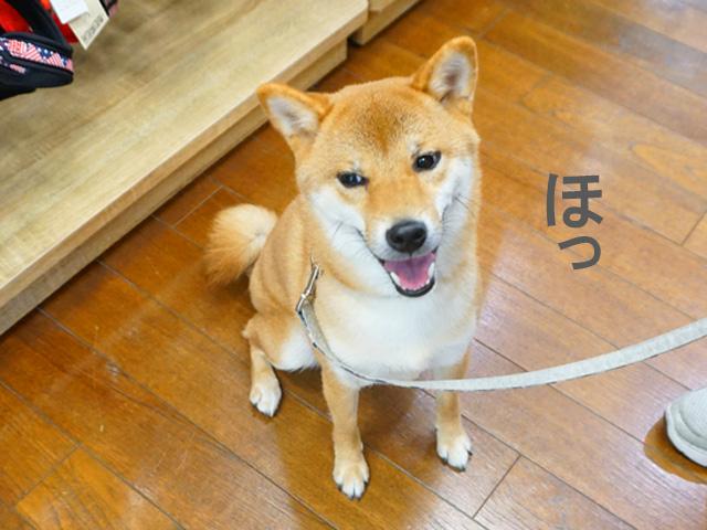 柴犬コマリ イオンペット