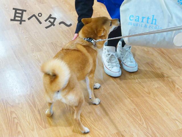 柴犬コマリ イオン 犬