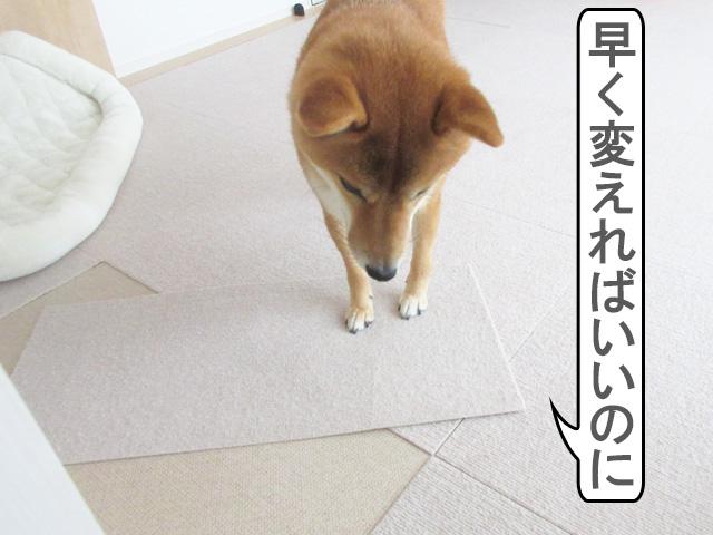 柴犬コマリ 犬用マット