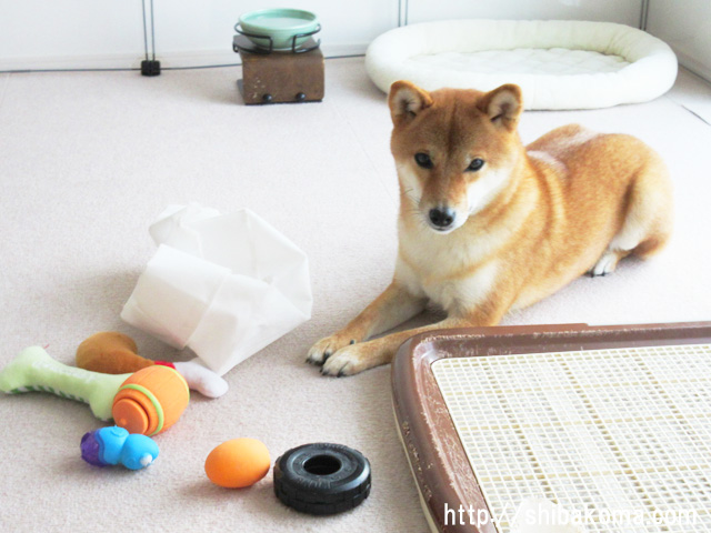 柴犬コマリ おもちゃ