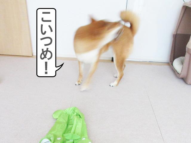 柴犬コマリ ストレスサイン