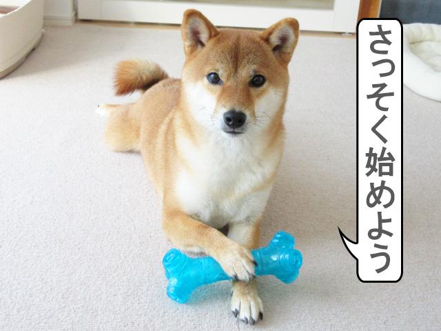 柴犬コマリ 骨 職人