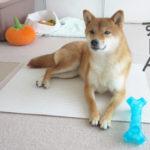 柴犬コマリ ペットマット