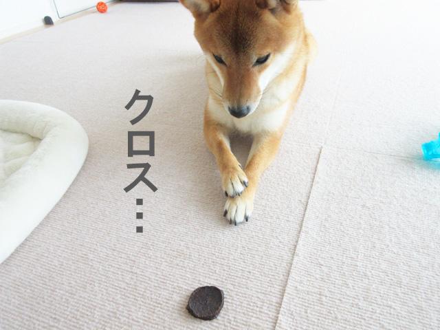 柴犬コマリ まぐろチップ おやつ