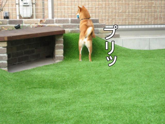 柴犬 ライオンキング
