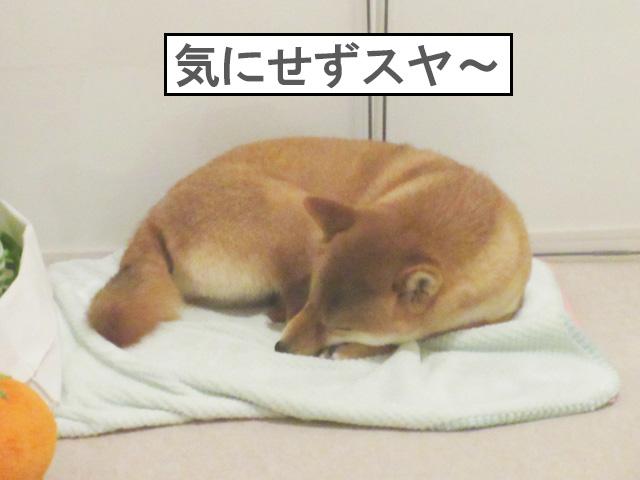 柴犬 ユカペットEX