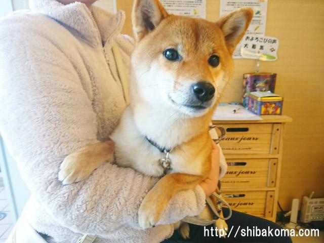 柴犬コマリ 風邪 病院