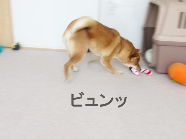 柴犬コマリ キャンディケーン