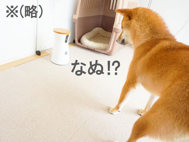柴犬コマリ Furbo ファーボ