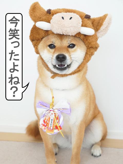 柴犬コマリ イノシシ 年賀状