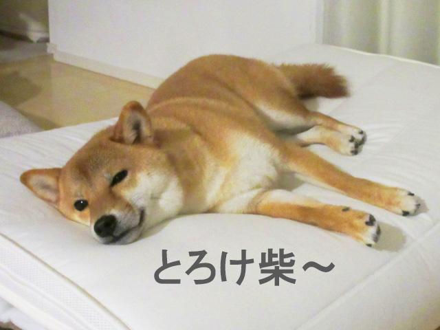 柴犬コマリ 家 シャンプー