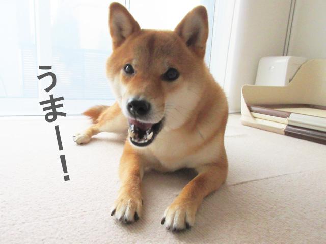 柴犬コマリ ドッグフード