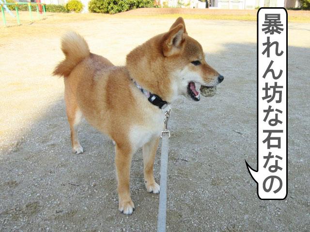 柴犬コマリ 石