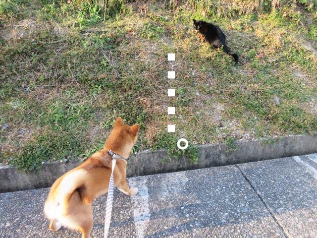 柴犬 黒猫