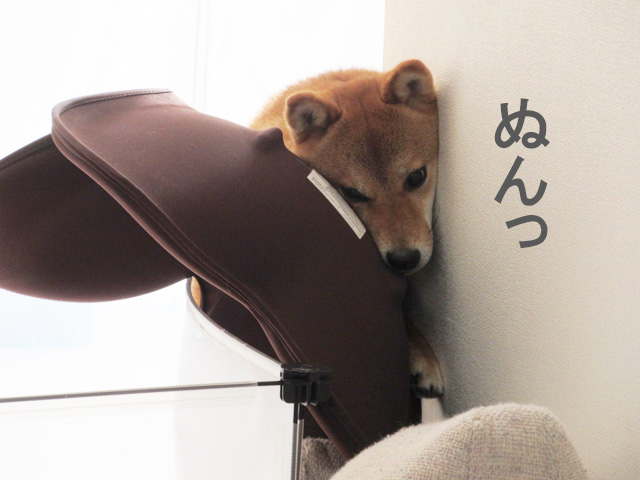 柴犬 座椅子