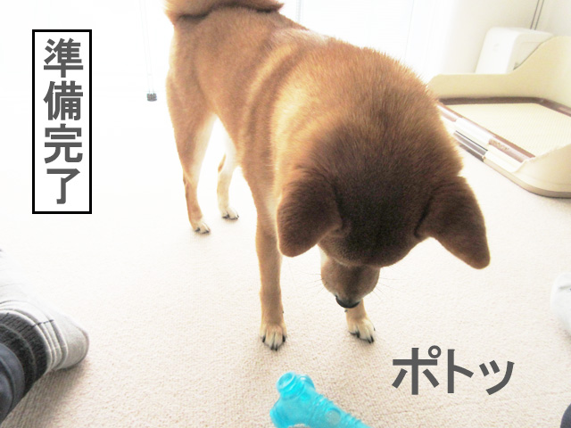 柴犬 おもちゃ