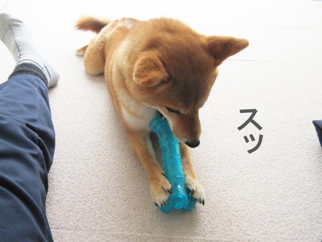 柴犬 おもちゃ 骨