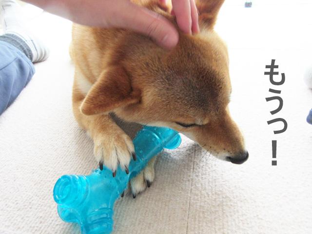 柴犬 骨 おもちゃ