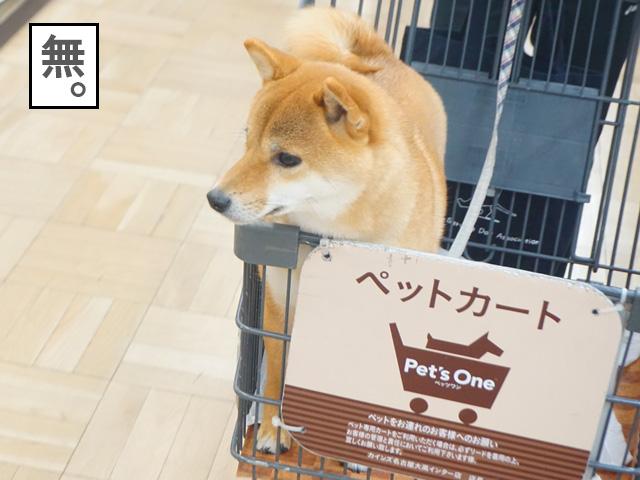 柴犬コマリ カインズ ペットカート