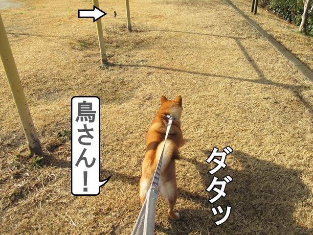 柴犬 ハンター
