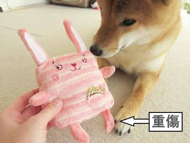 柴犬コマリ ウサギ おもちゃ