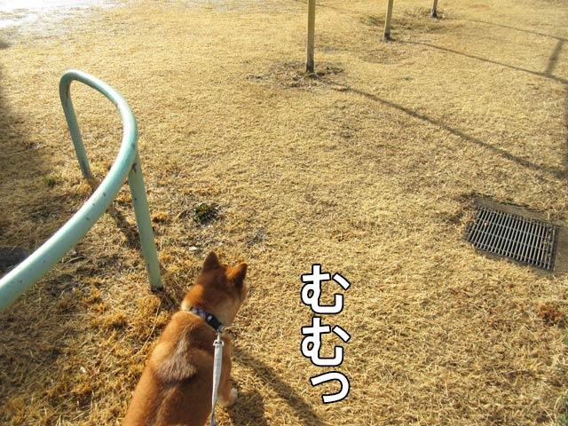 柴犬 狩猟犬