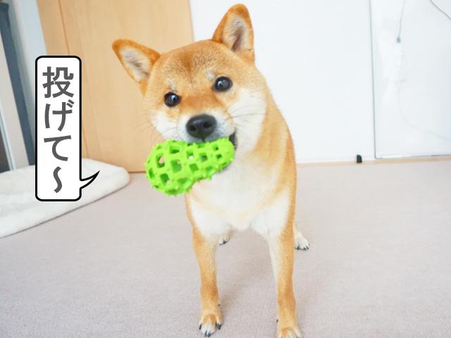 柴犬コマリ ボール おもちゃ