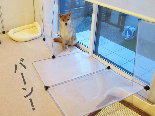 柴犬 フェンス