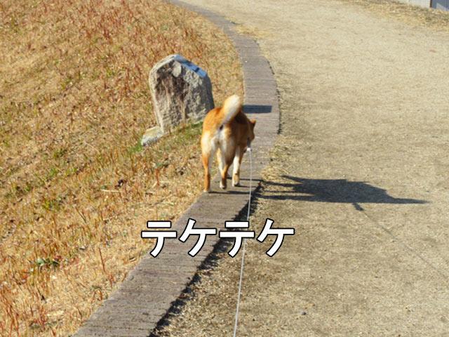 柴犬 ブロック