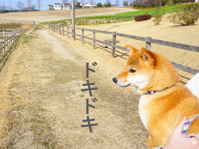 愛知牧場 犬