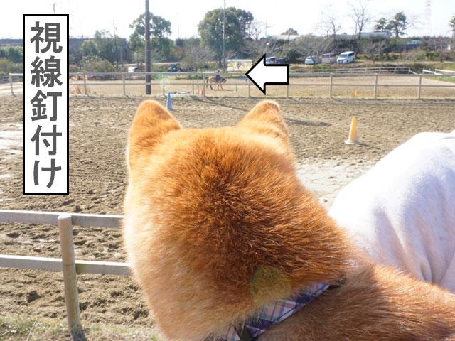 愛知牧場 乗馬