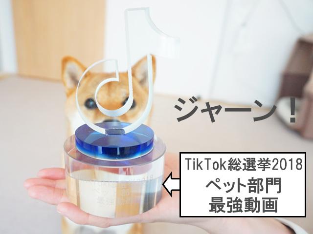 柴犬コマリ TikTok総選挙2018 トロフィー