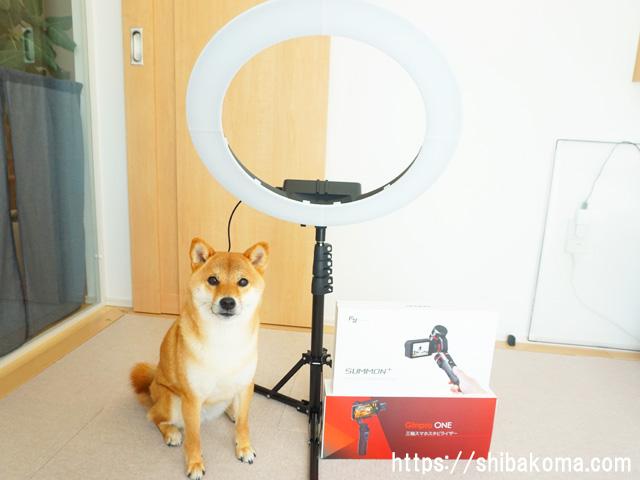 柴犬コマリ TikTok総選挙2018 賞品