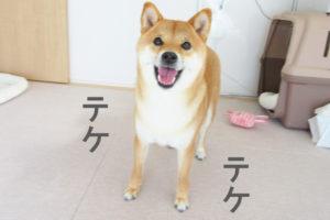 柴犬コマリ バック