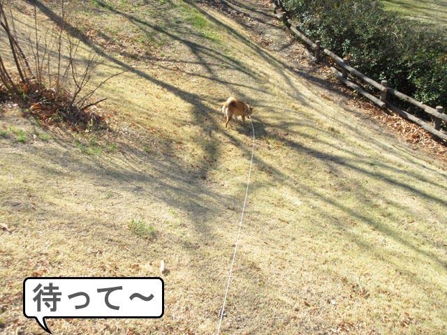 柴犬 狩り