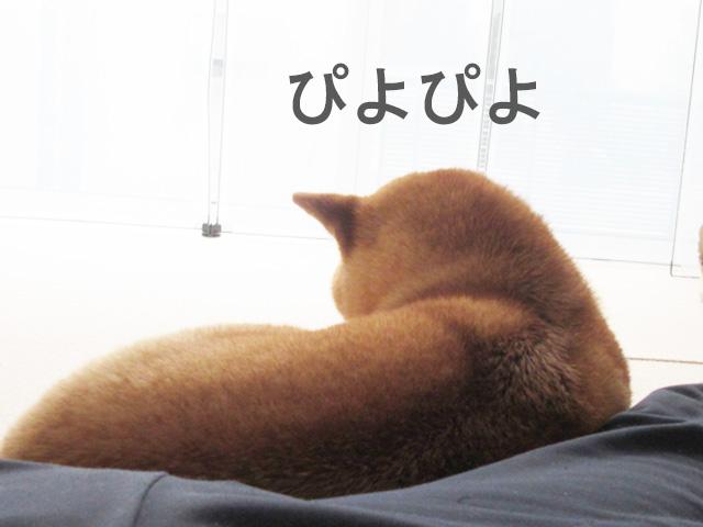柴犬 ひよこ饅頭