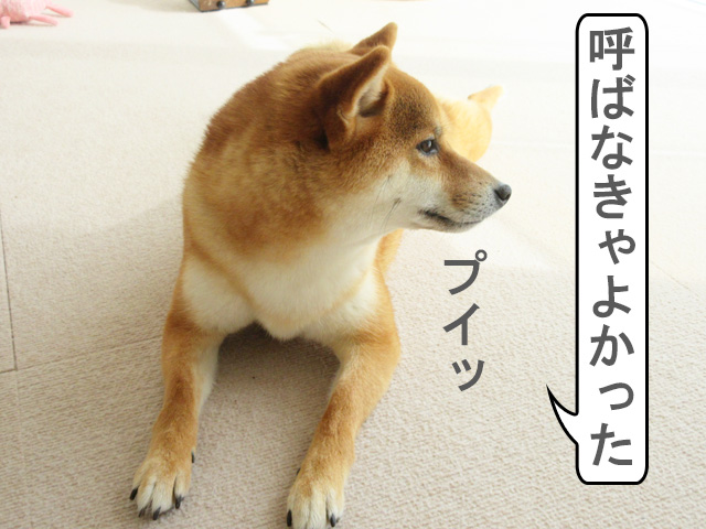 柴犬コマリ 後悔