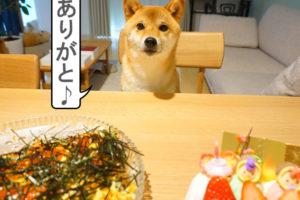 柴犬コマリ ひなまつり