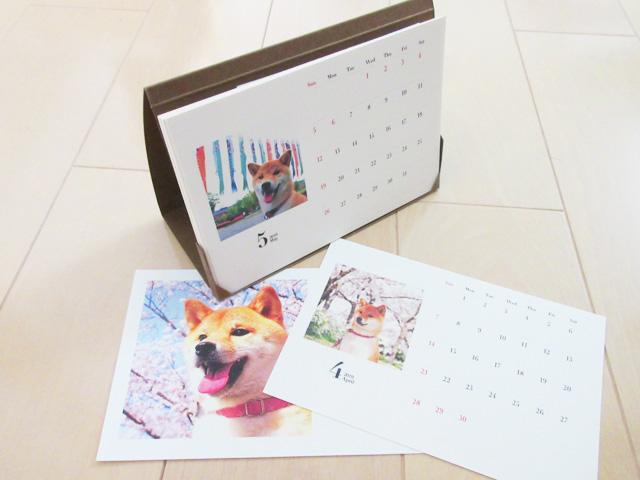柴犬コマリ カレンダー