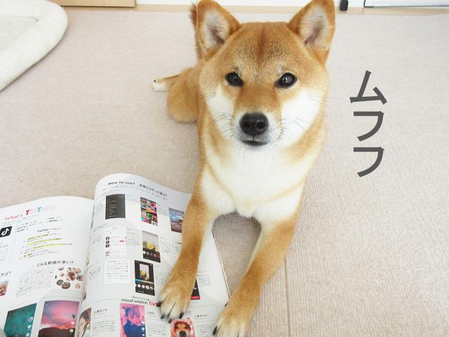 柴犬コマリ GENIC