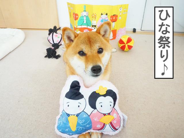 柴犬コマリ ひな祭り PECOBOX