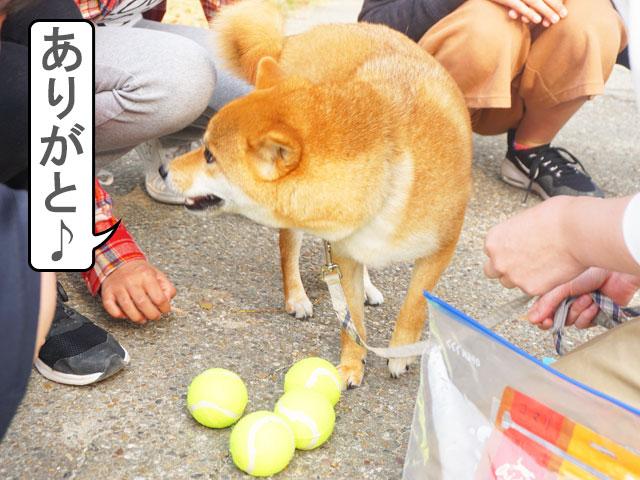 柴犬コマリ プレゼント企画