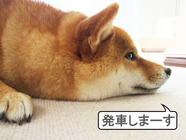柴犬コマリ 新幹線