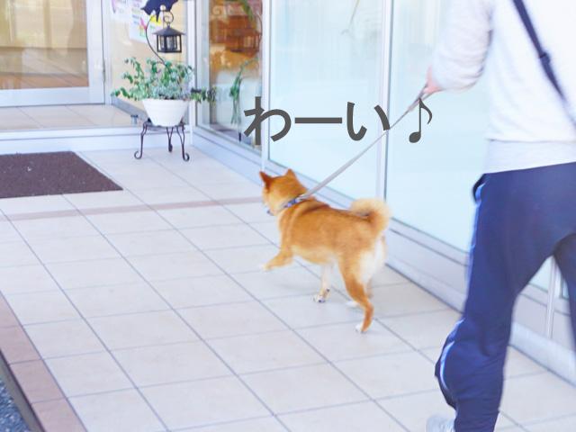 柴犬 シャンプー