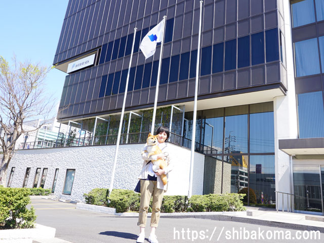 柴犬 静岡テレビ