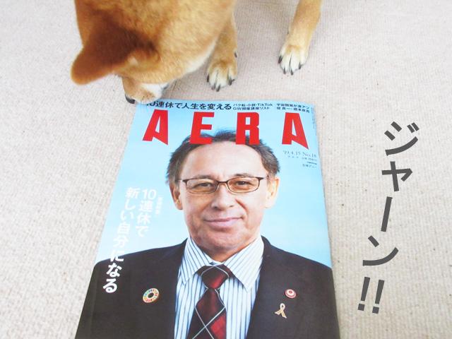 柴犬コマリ AERA