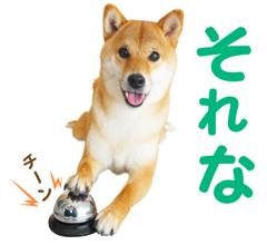 柴犬コマリ LINEスタンプ